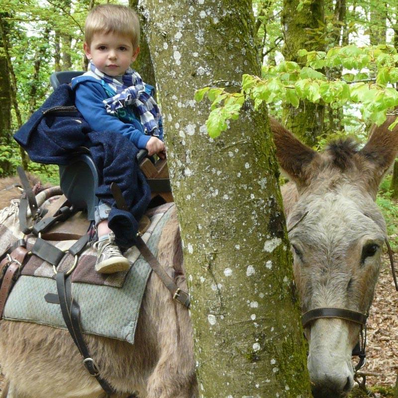randonnée-avec-des-ânes